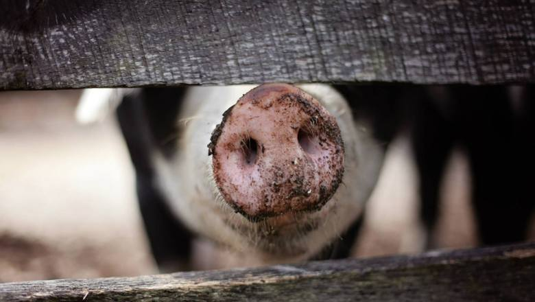 Konieczność wprowadzenia stawek celnych, zgodnych z taryfami Światowej Organizacji Handlu, oznacza problemy dla polskich producentów żywności. Najbardziej