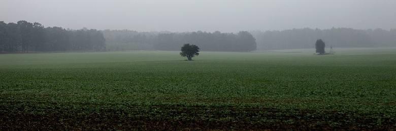 Raport z pól. Nadmiar wody na polach utrudnił zbiory oraz zasiewy