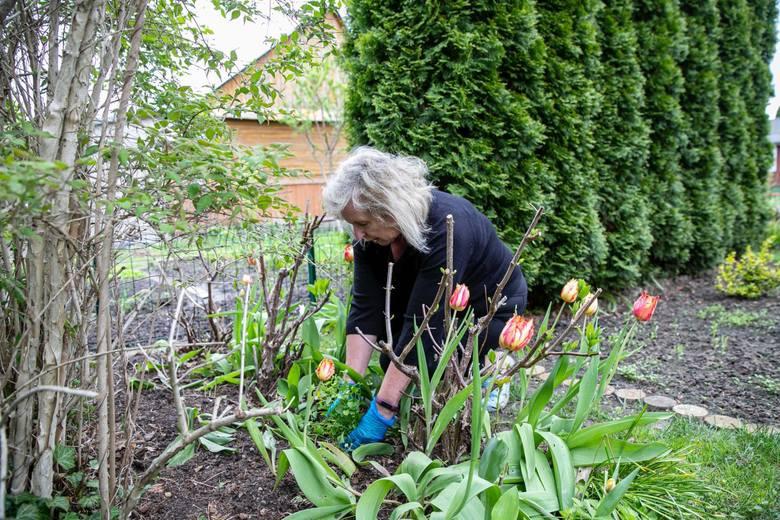 Elżbieta i Sławomir Paśniccy to weterani działkowania i miłośnicy roślin