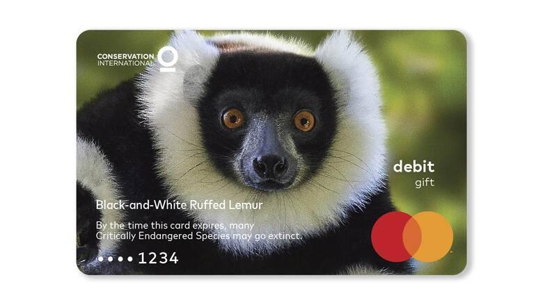 Wari czarno-białyWari jest znany jako największy na świecie ssak naczelny z rodziny lemurowatych. Populacja owocożernego gatunku zmniejszyła się o 80%