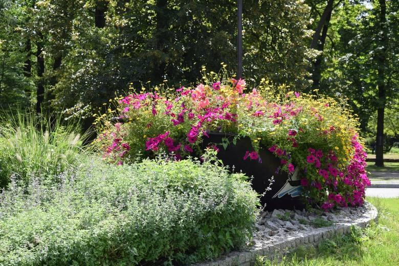 Czy potrzebujemy sezonowych kwiatów w miastach?