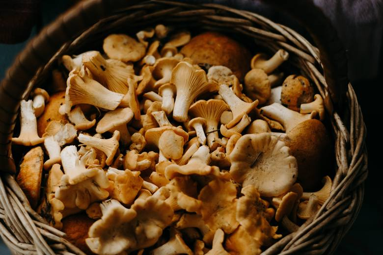 Przygotowanie grzybów krok po kroku - do spożycia, suszenia, mrożenia, marynowania
