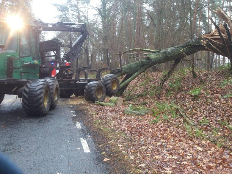 OSP KSRG Mieszkowice interweniowała o godz. 8.50 na drodze wojewódzkiej nr 126, pomiędzy Mieszkowicami a Gozdowicami, gdzie zostały powalone drzewa