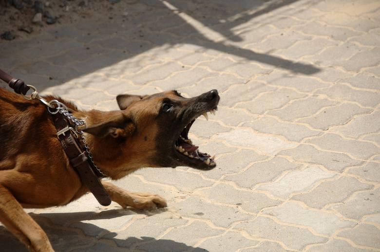 Weterynarz założył na osiedlu specjalną klatkę, w którą może złapać się agresywny pies.