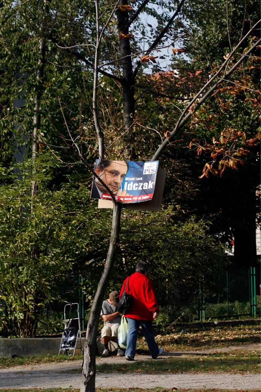 Legnica 2011. Obietnice rosną na drzewach