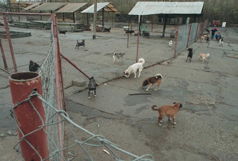 Opole w 2000 roku. Unikalne zdjęcia naszego fotoreportera Sławomira  Mielnika. Schronisko dla psów przy ulicy Torowej.