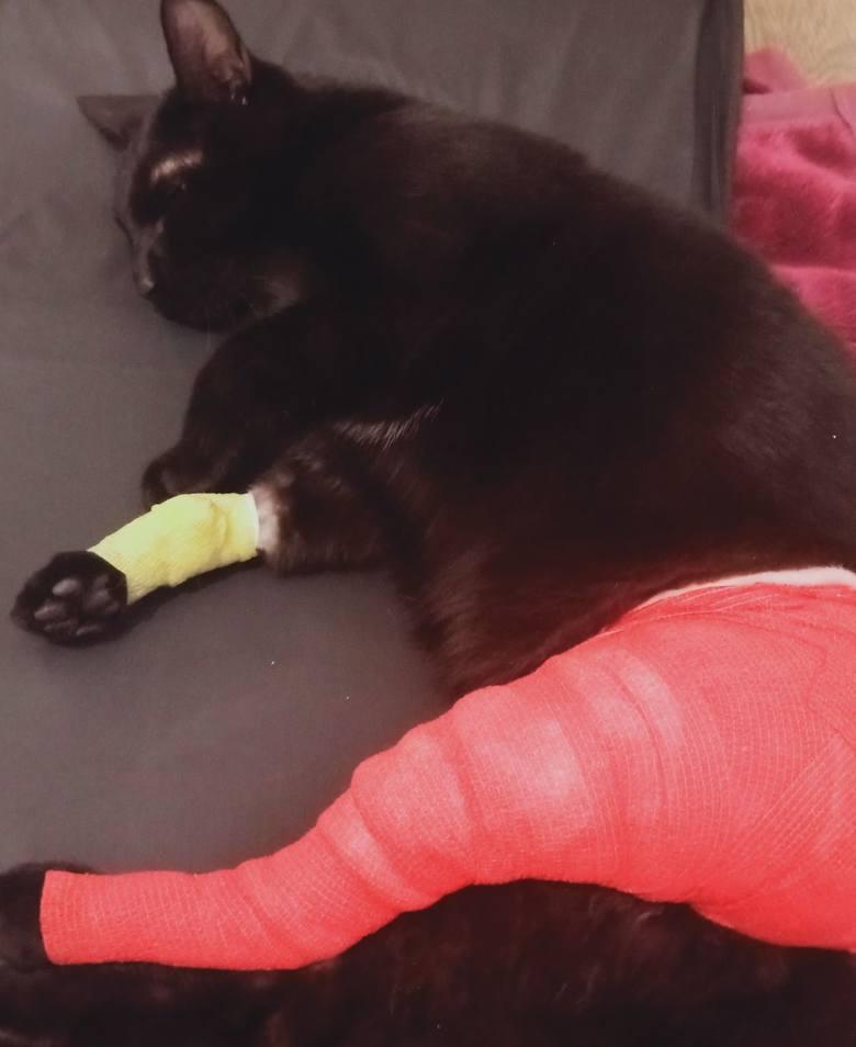 Ktoś strzela do zwierząt! Śrut z wiatrówki pogruchotał łapkę domowego kota. Właścicielka postrzelonego kota zgłosiła sprawę na policję