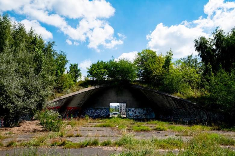 Stadion Szyca przez lata niszczał, ale dzięki temu wytworzył się na tym terenie cenny ekosystem.