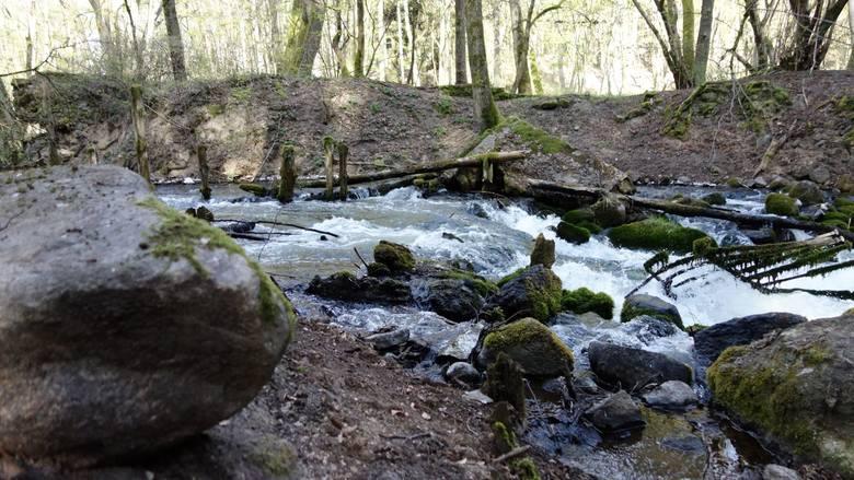 1 maja 2020 r. przypada 30. rocznica założenia Drawieńskiego Parku Narodowego (położony jest na terenie Lubuskiego, Zachodniopomorskiego i Wielkopol