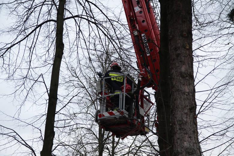 Ignatki - Wichura zwalila drzewo na blokIgnatki - Wichura zwalila drzewo na blok
