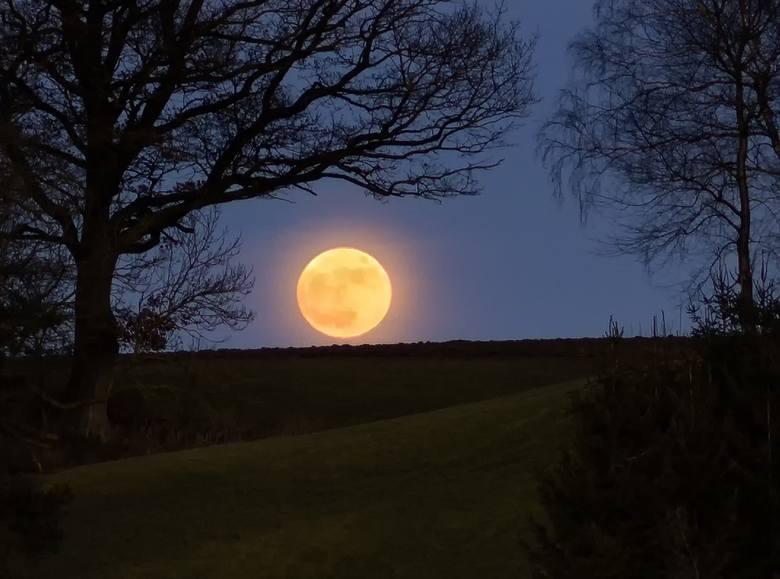 Kalendarz księżycowy zakłada, że faza Księżyca ma wpływ na rozwój roślin. Zobacz, jak wygląda plan prac na kwiecień.