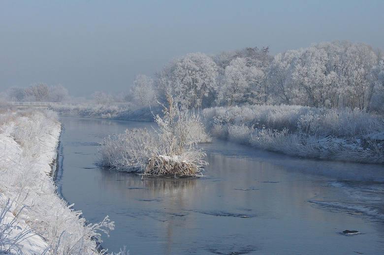 Ner w okolicach Konstantynowa Łódzkiego niesie wody oczyszczone przez Grupową Oczyszczalnię Ścieków