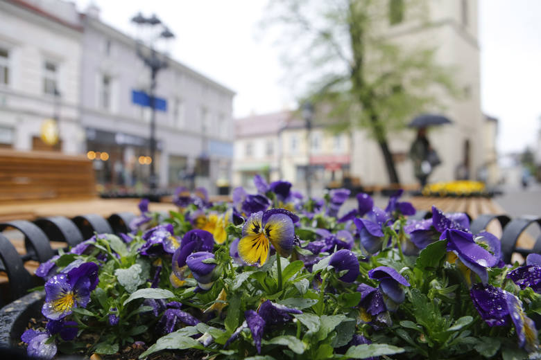 Rzeszów tonie w kwiatach. To wzbudza zachwyt wśród odwiedzających miasto [ZDJĘCIA]