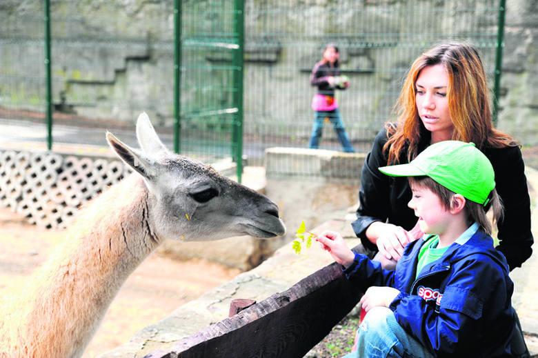 6-letni Paskal i jego mama zatrzymali się nieco dłużej podczas wędrówki po zoo przy wybiegu dla lam.