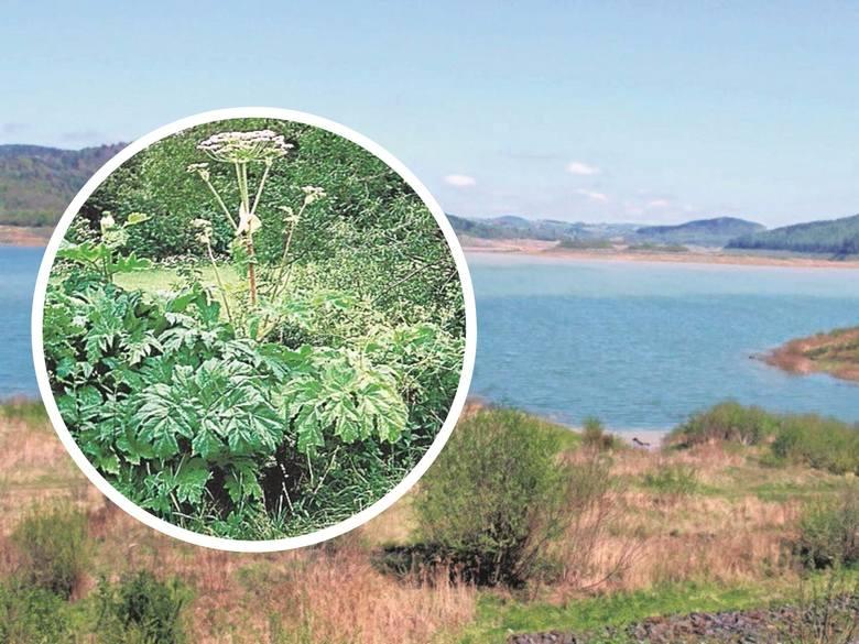 Po kontroli okazało się, że na trujące krzewy mogą natknąć się ludzie zwiedzający okolice jeziora