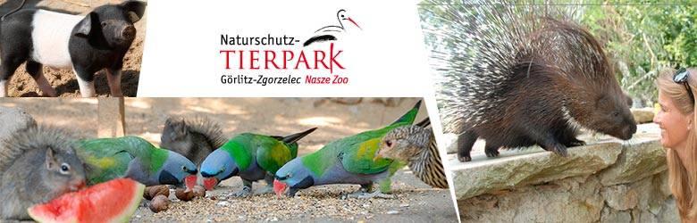 Do Naszego Zoo - Naturschutz-Tierpark Gȍrlitz-Zgorzelec pojadą zwycięzcy etapu finałowego, tj. I, II i III miejsce w kategoriach: Klasy 0-3 szkół podstawowych