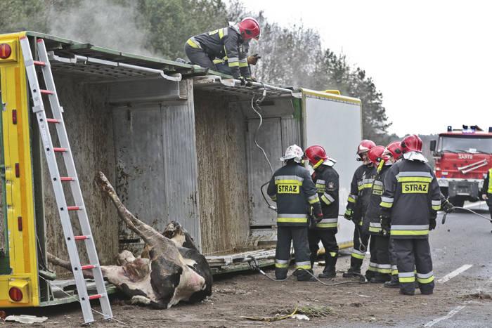 Wypadek ciężarówki ze zwierzętami na S3 pod Zieloną Górą