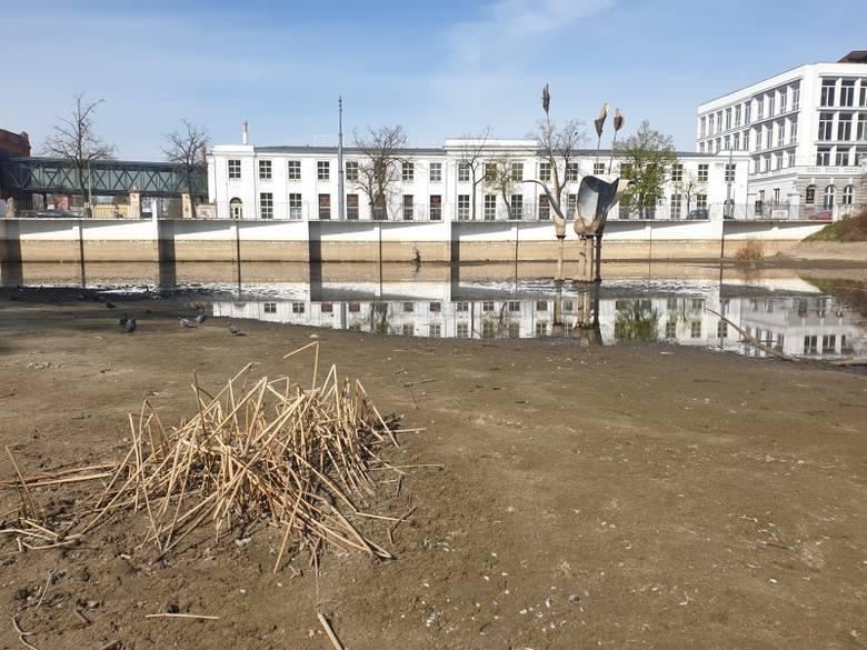 Wyjątkowo suchy staw w centrum Łodzi. Poziom wody powinien być wyższy o dwa metry! ZDJĘCIA