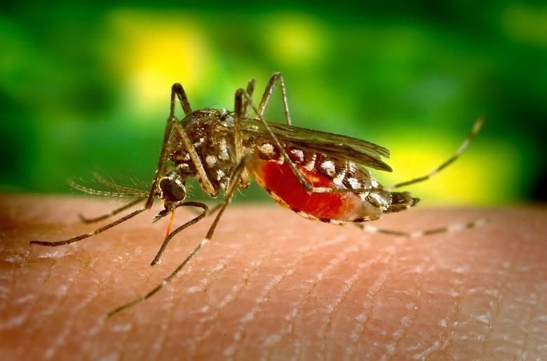 Choroba wirusowa przenoszoną przez owady w tropikalnych częściach świata.Zobacz kolejne miejsce --->