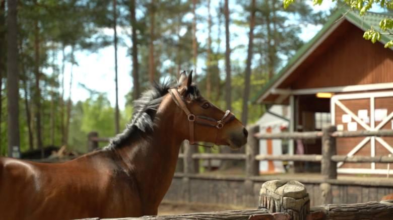 Smaki Pomorza. Odcinek 4: Tu nauczysz się jazdy konnej i smacznie zjesz. Na przykład polędwiczki wieprzowe w staropolskim sosie. Przepis