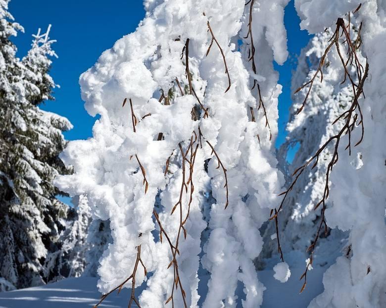 Zima w pełni. Na portalach społecznościowych nie brak fotografii z białym puchem w tle. Zobacz jakie zdjęcia mieszkańcy Grójca powiatu grójeckiego wrzucają