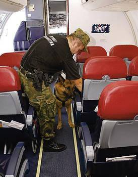 Pies przeszukuje kabinę pasażerską