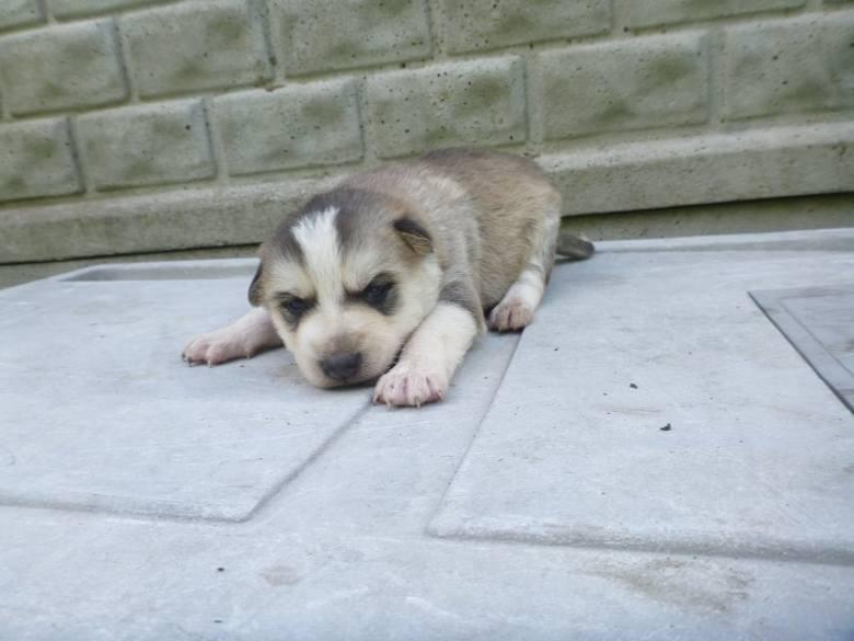 Chciałbyś mieć czworonożnego przyjaciela, nie kupuj adoptuj! W Schronisku dla Zwierząt w Małym Bożym w gminie Stromiec czekają psy, które potrzebują