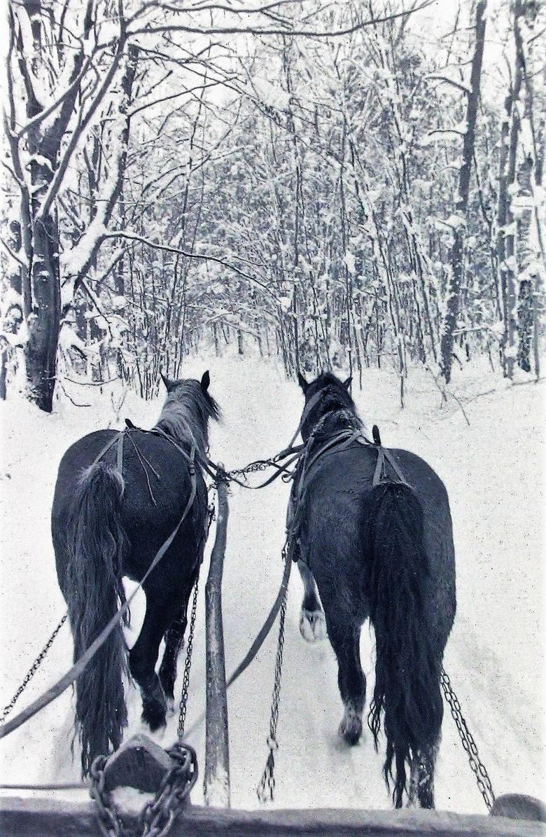 Z zimą stulecia najlepiej radziły sobie zaprzęgi konne.