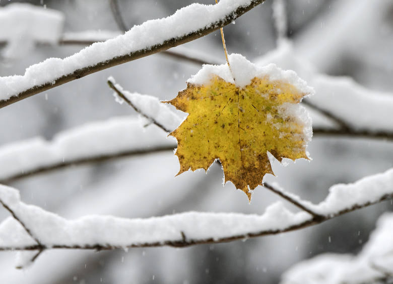 Pogoda na zimę w Polsce.