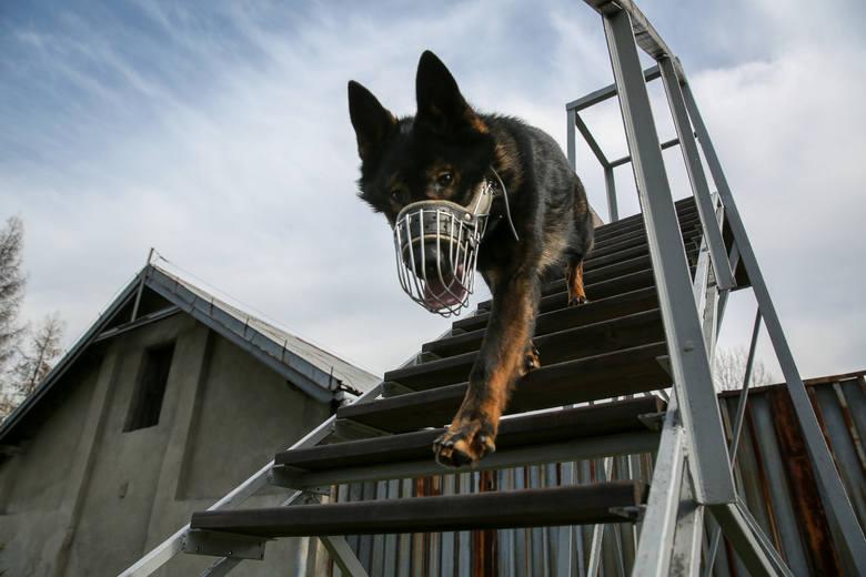 Psy małopolskiej policji