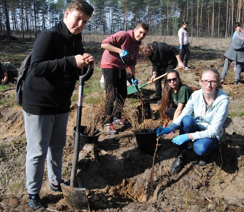 Młodzież z Gimnazjum, Zespołu Szkół Technicznych w Skwierzynie oraz Zespołu Szkół Technicznych zasadziła ponad 2 tys. drzew w lesie koło Zemska. - Las