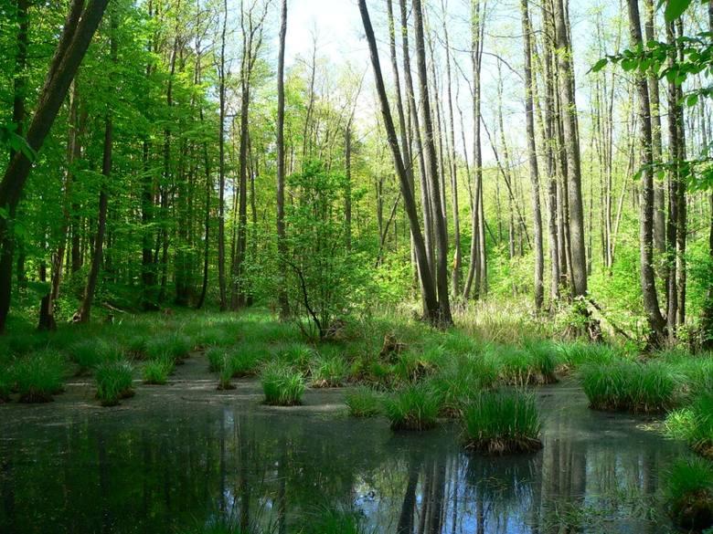 Poznaj dziesięć niezwykłych lubuskich lasów. Musisz je zobaczyć. Lubuskie lasy są piękne, rozległe i urzekają