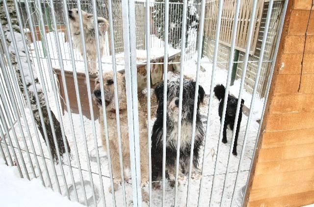 Psy czekają na nowy dom.