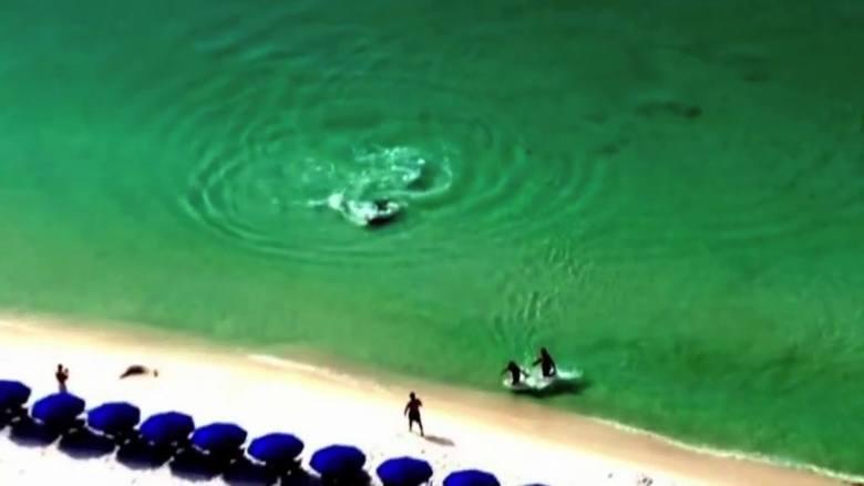 Cudem uniknęli rozszarpania przez rekina (wideo)
