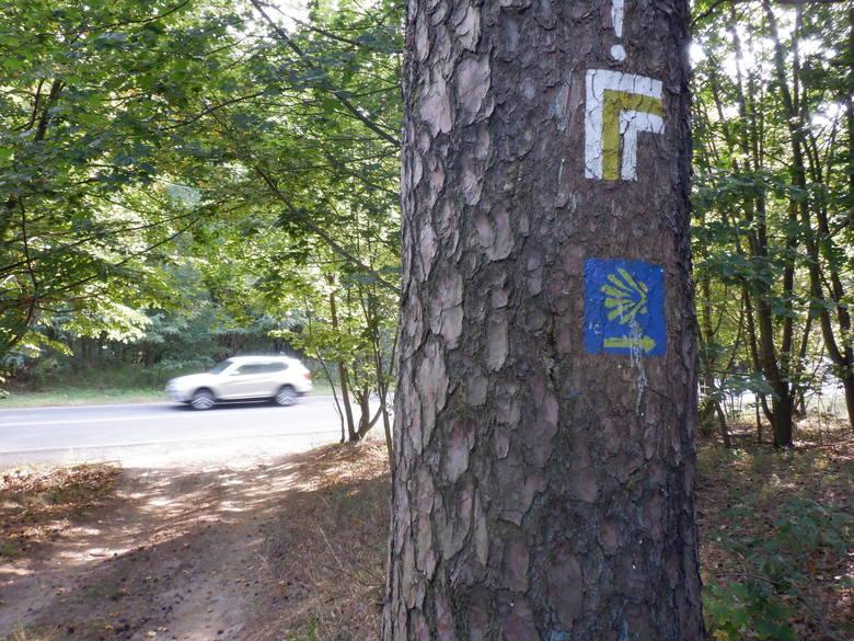 W tym miejscu Droga św. Jakuba i Szlak Puszczański włączają się w ciąg ulicy Nowotoruńskiej na wschodnich rubieżach Bydgoszczy. Na szczęście jest to