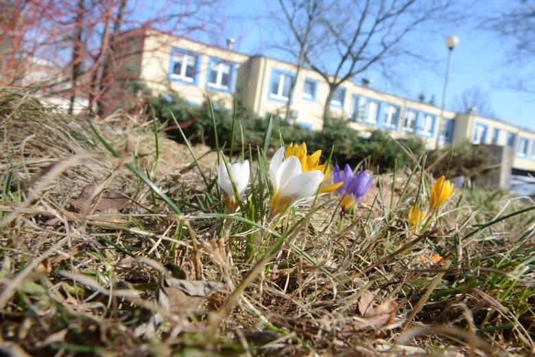 Pierwszy dzień wiosny 2018. Kiedy jest pierwszy dzień wiosny? Już w środę, 21 marca rozpocznie się wiosna. Oczywiście będzie to KALENDARZOWA WIOSNA 2018.