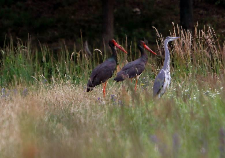 Hobby Józefa Włodarza jest fotografowanie przyrody. Godzinami czyha z obiektywem w lasach na zwierzęta. Efekty są fascynujące.- Wszystkie te zdjęcia