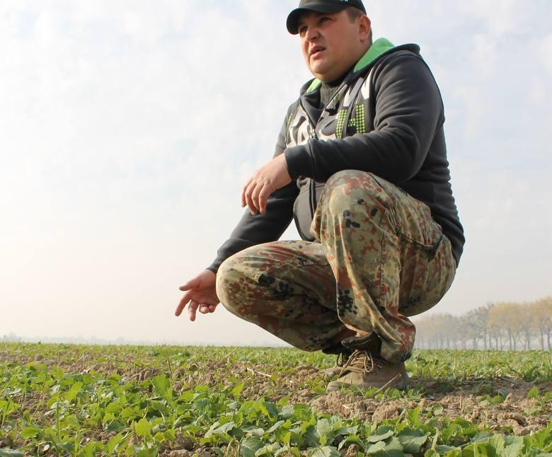 Rzepak ledwo odstaje od ziemi - pokazuje Krzysztof Chruszczewski z Łosiowa. W innych częściach regionu nie jest lepiej.