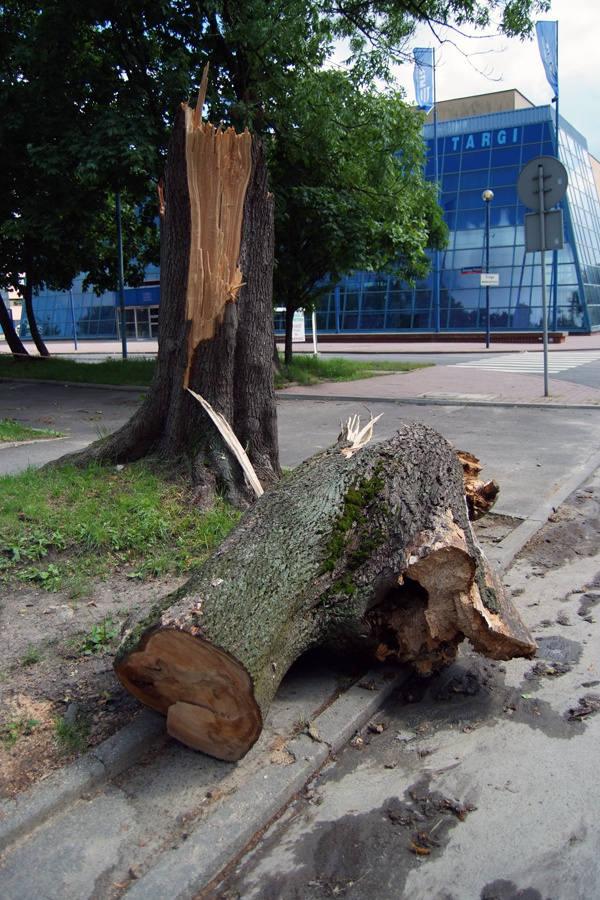 Pień drzewa złamanego przy ul. Stefanowskiego.