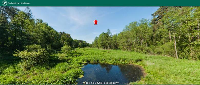 Wirtualny spacer po lesie to w obecnej sytuacji idealna forma spędzenia wolnego czasu.