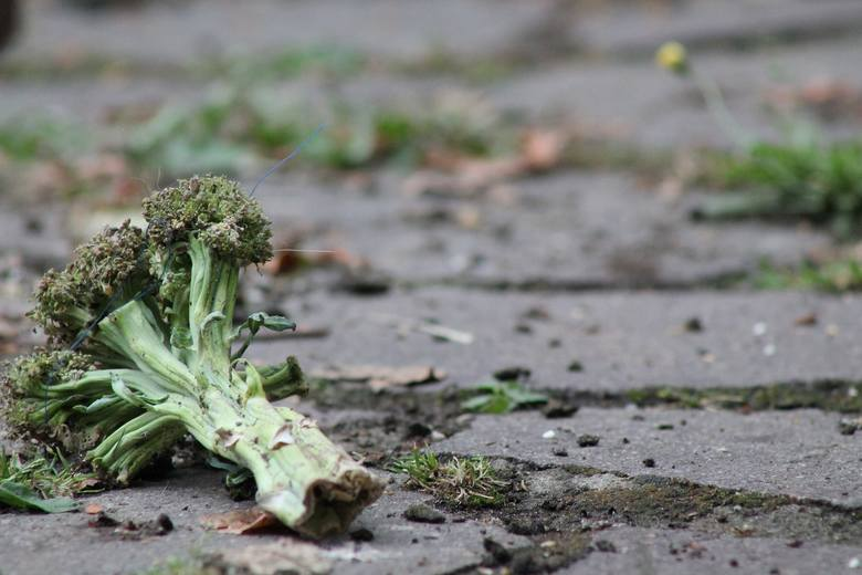 Resztki ze stołu prosto na podwórko? To szkodzi zwierzętom i grozi mandatem, nawet 5000 zł. Nie wyrzucaj jedzenia na bruk!