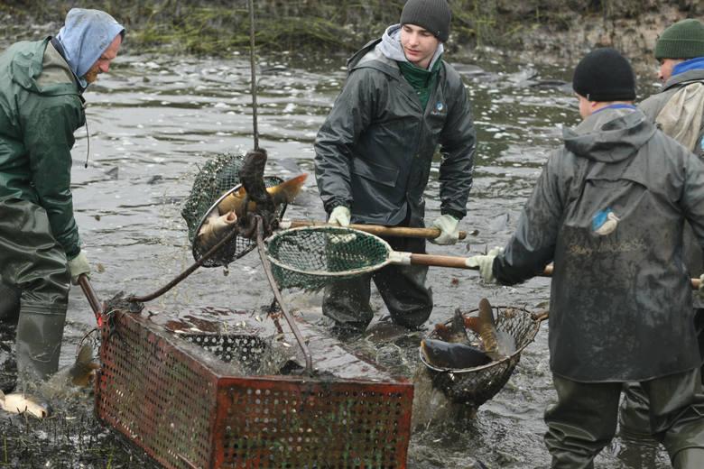 W województwie opolskim mamy kilkadziesiąt gospodarstw rybackich.
