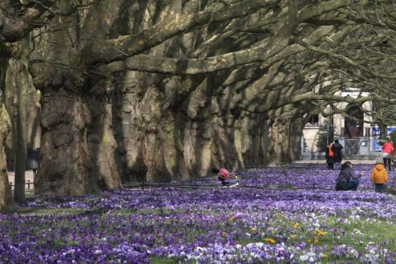 Huk pioruna i ryk syreny, czyli odgłosy nadchodzącej wiosny