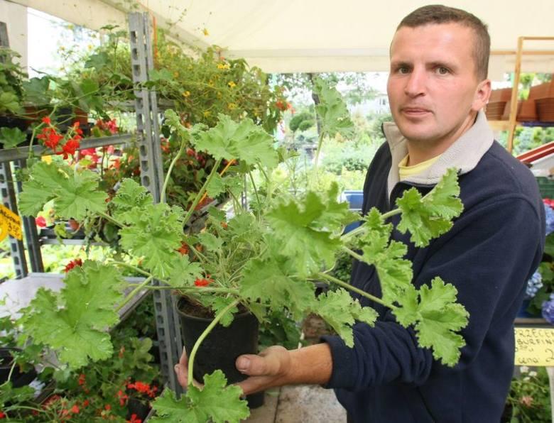 Podpowiadamy, jakie rośliny skutecznie je odstraszą (ZDJĘCIA)