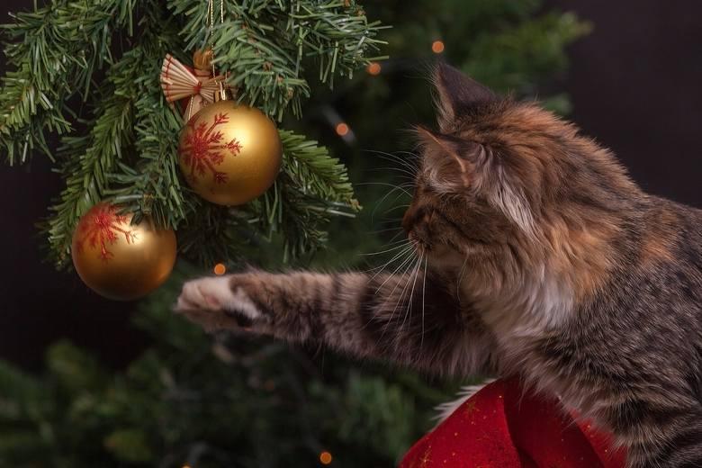 Co roku życzymy zdrowych i spokojnych Świąt. Mogą one być bardzo nerwowe, kiedy to wszystkie bombki będą potłuczone przez kota, a cukierki zjedzone przez