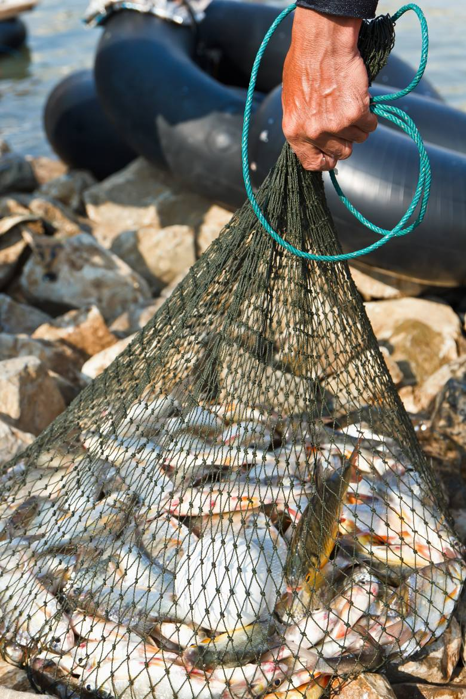 Kupuj ryby ze zrównoważonych połowówMorza i oceany zajmują ponad 2/3 powierzchni Ziemi. To one dostarczają nam pożywienia, a organizmy w nich żyjące