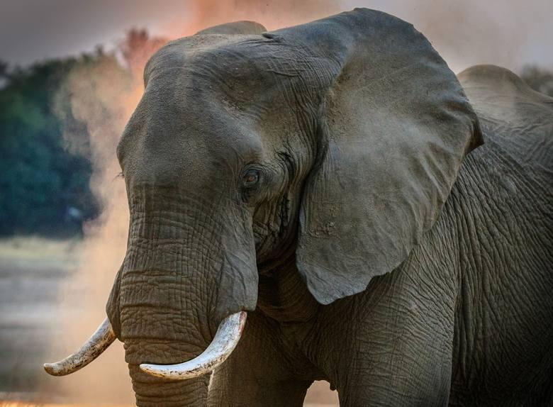 Wyroby z kości: słoni, nosorożców i hipopotamów.
