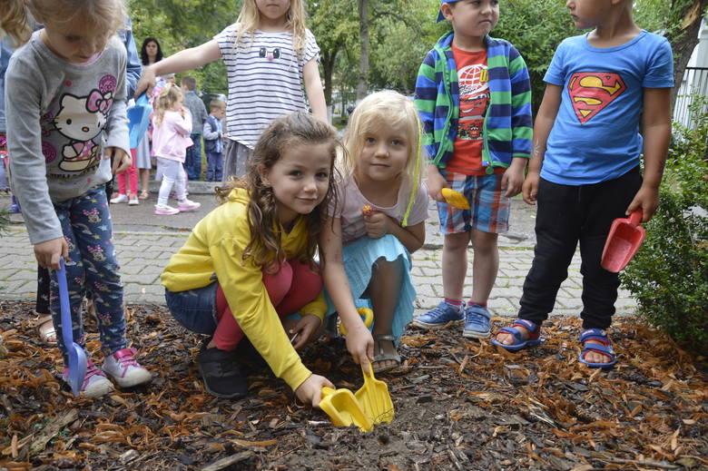 Cebulka była jedna, dzieci prawie 30. Ale daliśmy radę wkopać irysa w ziemię dzięki znakomitej organizacji!