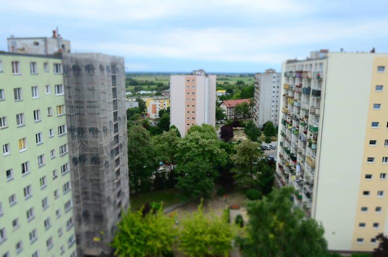 Taki widok pustułki mają z balkonu pani Doroty