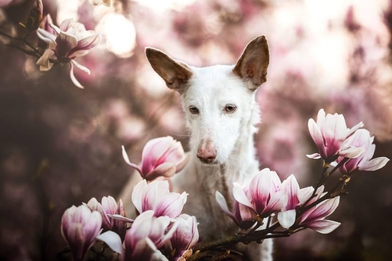 To najsłodsze co dzisiaj zobaczysz! Te zdjęcia zwyciężyły w konkursie Dog Photography of The Year